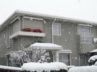 お向かいの家に降る雪