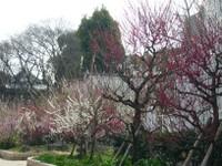 花の公園の梅