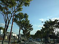 樟葉への道