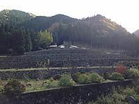 都川の棚田