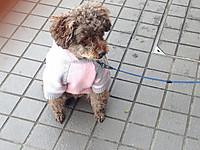 セーターを着た子犬